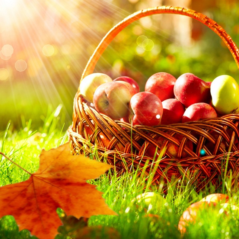 Fall image, apples in basket with sun rays shining on it